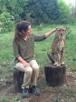 cheetahs-rock-avec-guépard