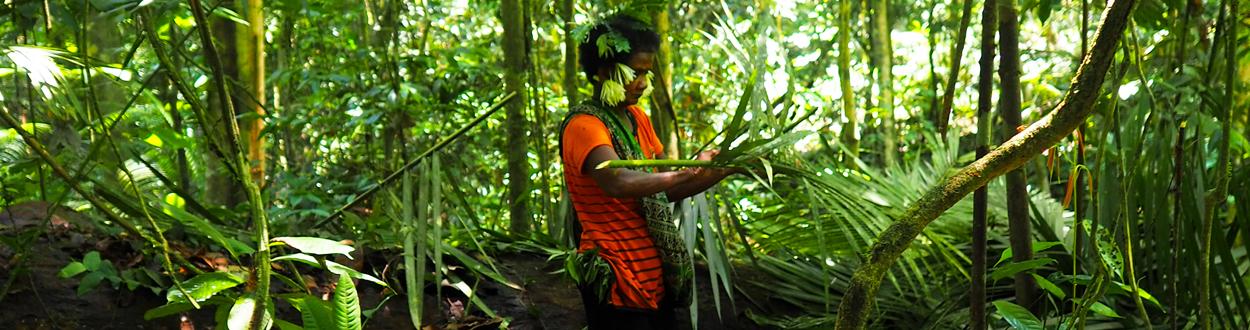 Une femme Batek plie des branchages pour construire un abri dans la jungle du Taman Negara en Malaisie