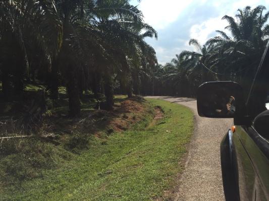 Sur la route du Taman Negara à Merapoh en Malaisie