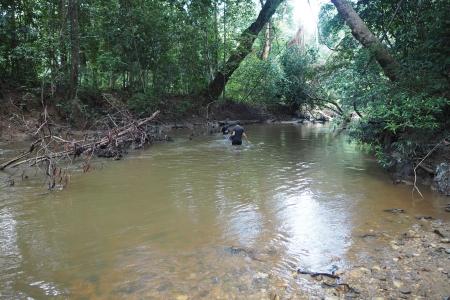 Traverser la rivière dans la forêt tropicale du Taman Negara à Merapoh en Malaisie